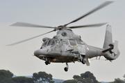 Eurocopter AS-565SA Panther (503)