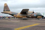 Lockheed C-130H Hercules (L-382) (347)